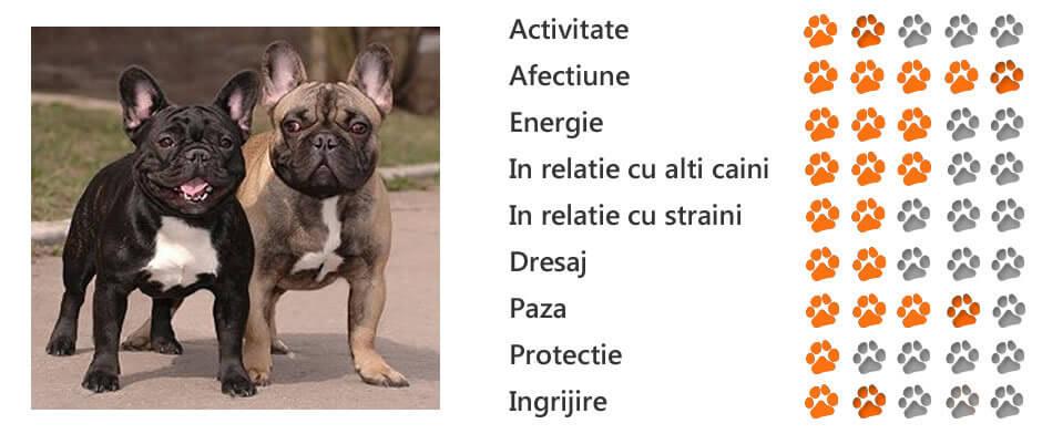 boala bulldogului englezesc