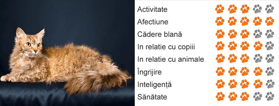 Boli pe care le poti lua de la pisica ta | ciuperca.realitateasatelor.ro - Animax Blog