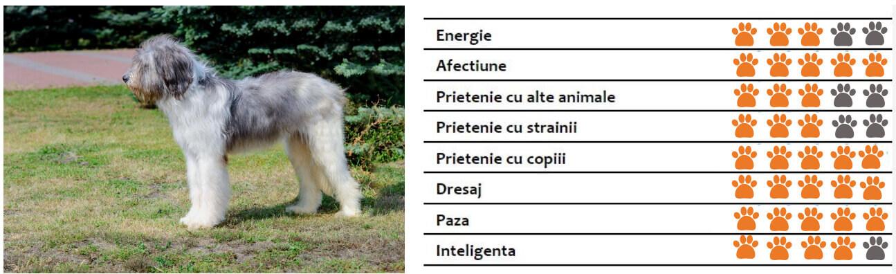 Caracteristici Ciobănesc Mioritic