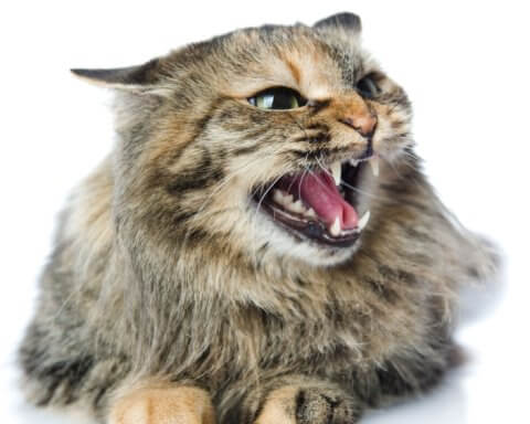Pisici care suferă de stres?