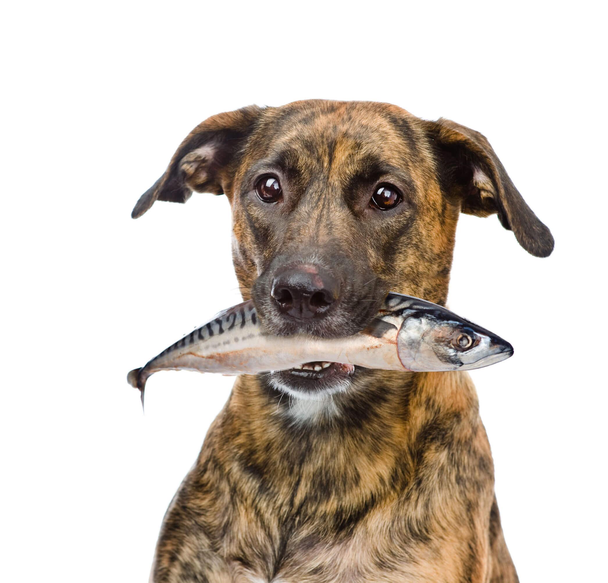 pestele in hrana animalelor de companie