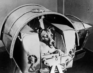 Laika, Russian cosmonaut dog, 1957.