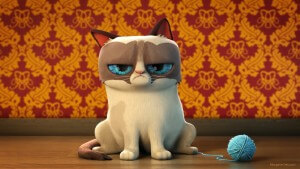 Funny-grumpy-cat-wallpapers-7