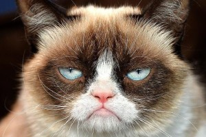grumpy-cat-1