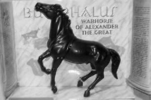 bucephalus 4