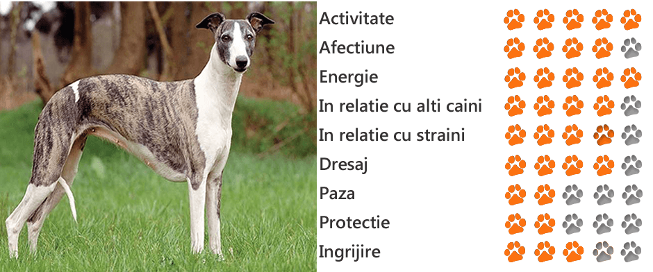 Fundația italiană Greyhound Rescue